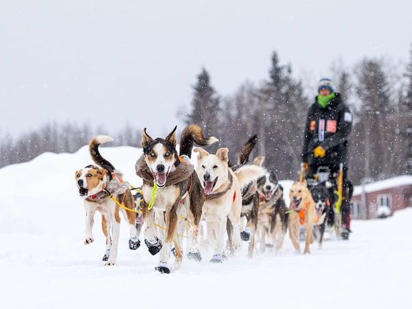 Joar Rohn Iditarod 2019