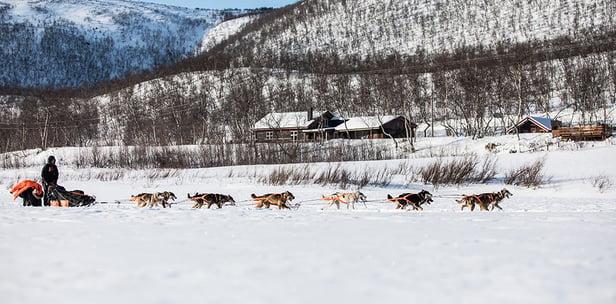 Finnmark 2019 Dallas QRILL Team